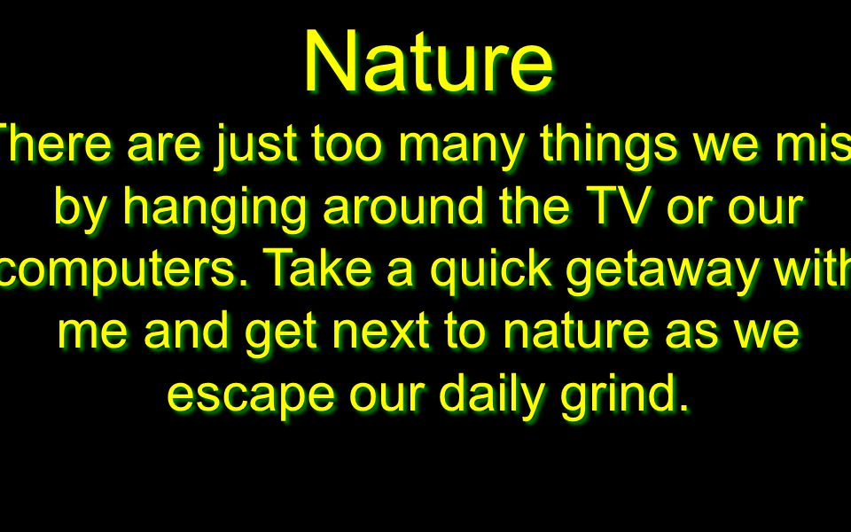 Nature There are just too many things we miss by hanging around the TV or our computers.