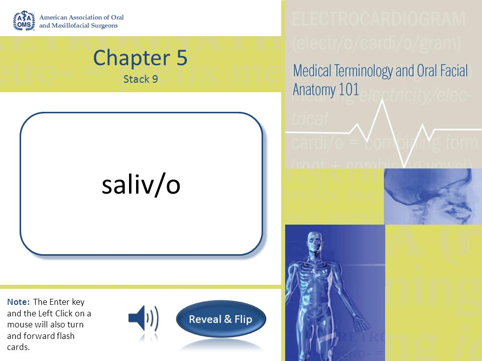 Chapter 5 Stack 9 Saliva; Salivary gland sial/o Note: The Enter key and the Left Click on a mouse will also turn and forward flash cards.