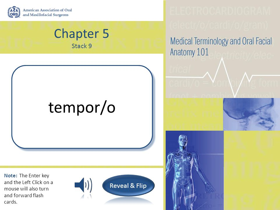 Chapter 5 Stack 9 Temple; Temporal bone tempor/o Note: The Enter key and the Left Click on a mouse will also turn and forward flash cards.
