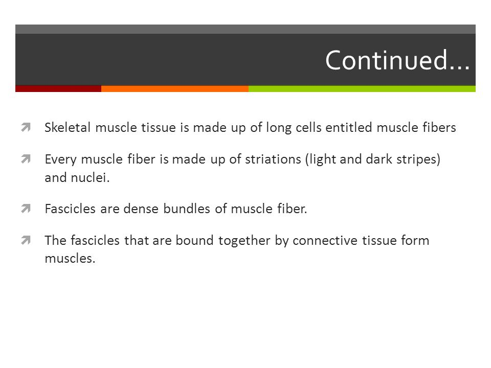 Continued…  Skeletal muscle tissue is made up of long cells entitled muscle fibers  Every muscle fiber is made up of striations (light and dark stri
