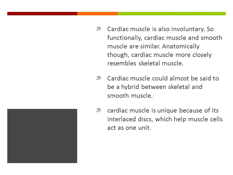  Cardiac muscle is also involuntary. So functionally, cardiac muscle and smooth muscle are similar. Anatomically though, cardiac muscle more closely
