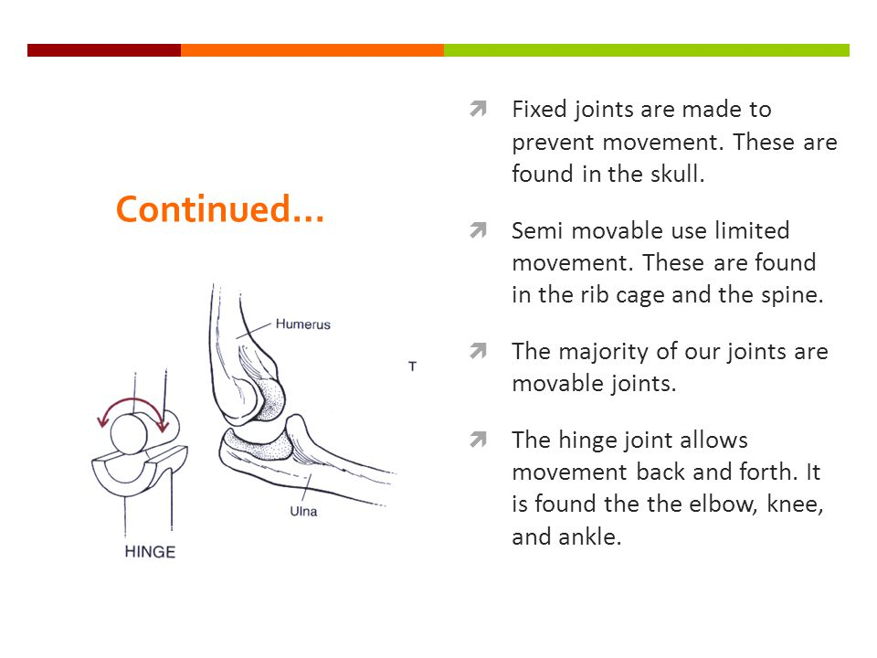Continued…  Fixed joints are made to prevent movement.