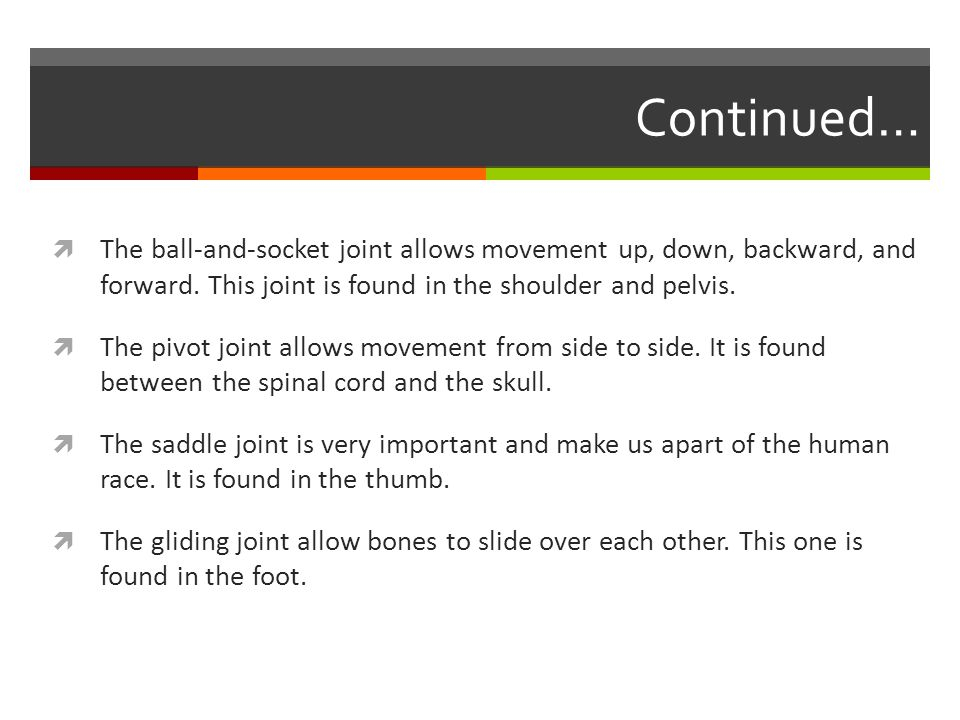 Continued…  The ball-and-socket joint allows movement up, down, backward, and forward.