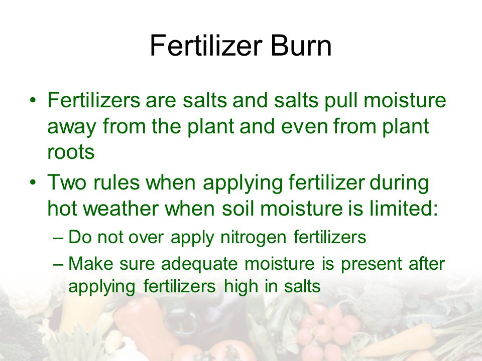 Fertilizer Burn Fertilizers are salts and salts pull moisture away from the plant and even from plant roots Two rules when applying fertilizer during hot weather when soil moisture is limited: –Do not over apply nitrogen fertilizers –Make sure adequate moisture is present after applying fertilizers high in salts