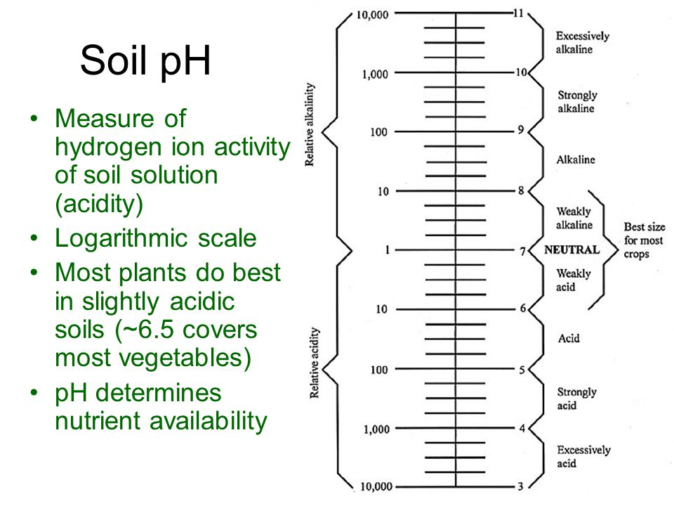 Soil pH Measure of hydrogen ion activity of soil solution (acidity) Logarithmic scale Most plants do best in slightly acidic soils (~6.5 covers most vegetables) pH determines nutrient availability