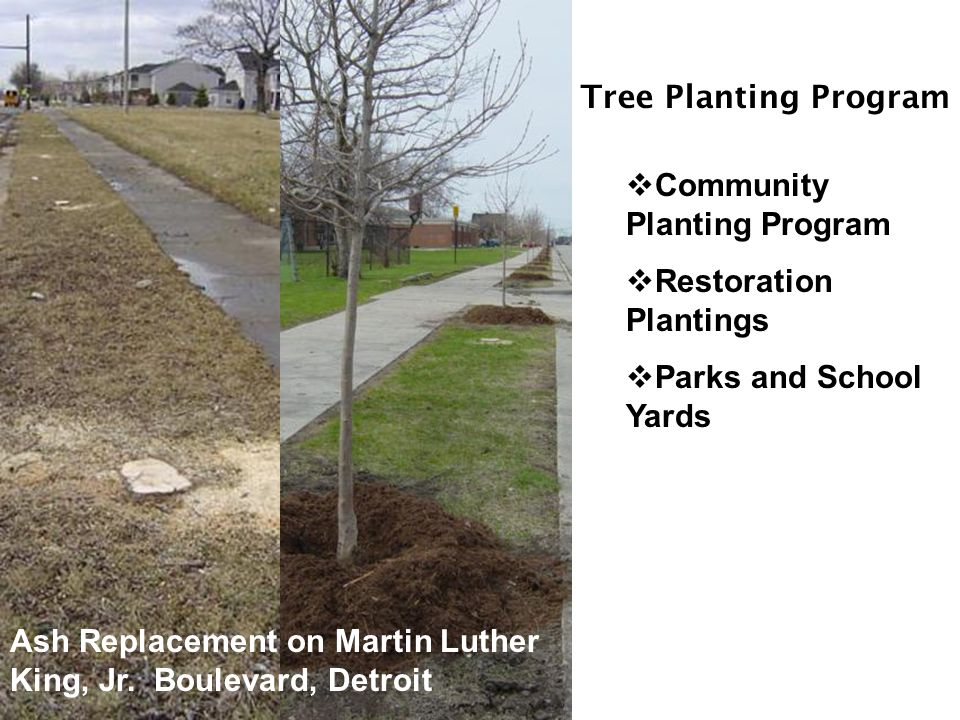 Tree Planting Program  Community Planting Program  Restoration Plantings  Parks and School Yards Ash Replacement on Martin Luther King, Jr.