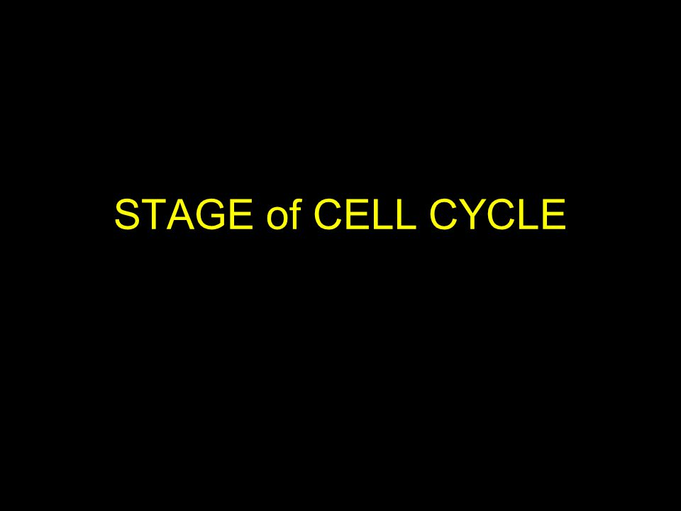 STAGE of CELL CYCLE