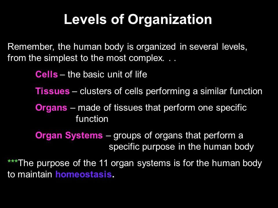 Levels of Organization Remember, the human body is organized in several levels, from the simplest to the most complex... Cells – the basic unit of lif