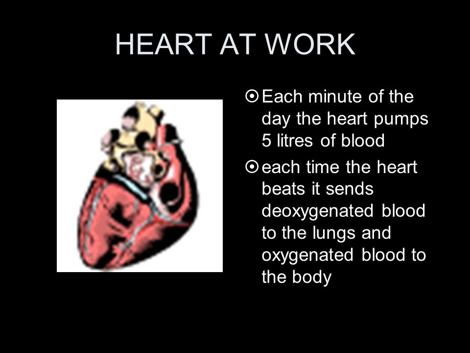 HEART AT WORK ¤Each minute of the day the heart pumps 5 litres of blood ¤each time the heart beats it sends deoxygenated blood to the lungs and oxygen