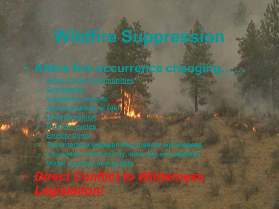 7 Wildfire Suppression Alters fire occurrence changing…… –Natural plant communities –Succession –Vegetation mosaic –Accumulations of fuel –Wildlife habitat –Nutrient cycles –Energy flows –The interplay between fire, insects and disease –Ecosystem productivity, diversity and stability –Water quantity and quality Direct Conflict to Wilderness Legislation!