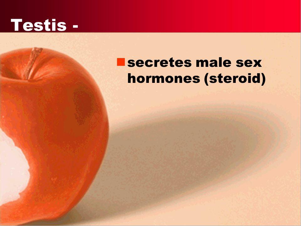 Progesterone - female hormone. Prepares and maintains uterus during pregnancy.