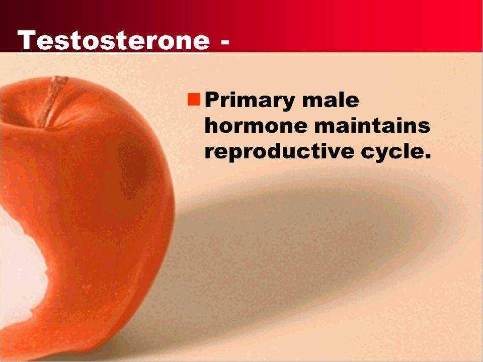 Testis - secretes male sex hormones (steroid)