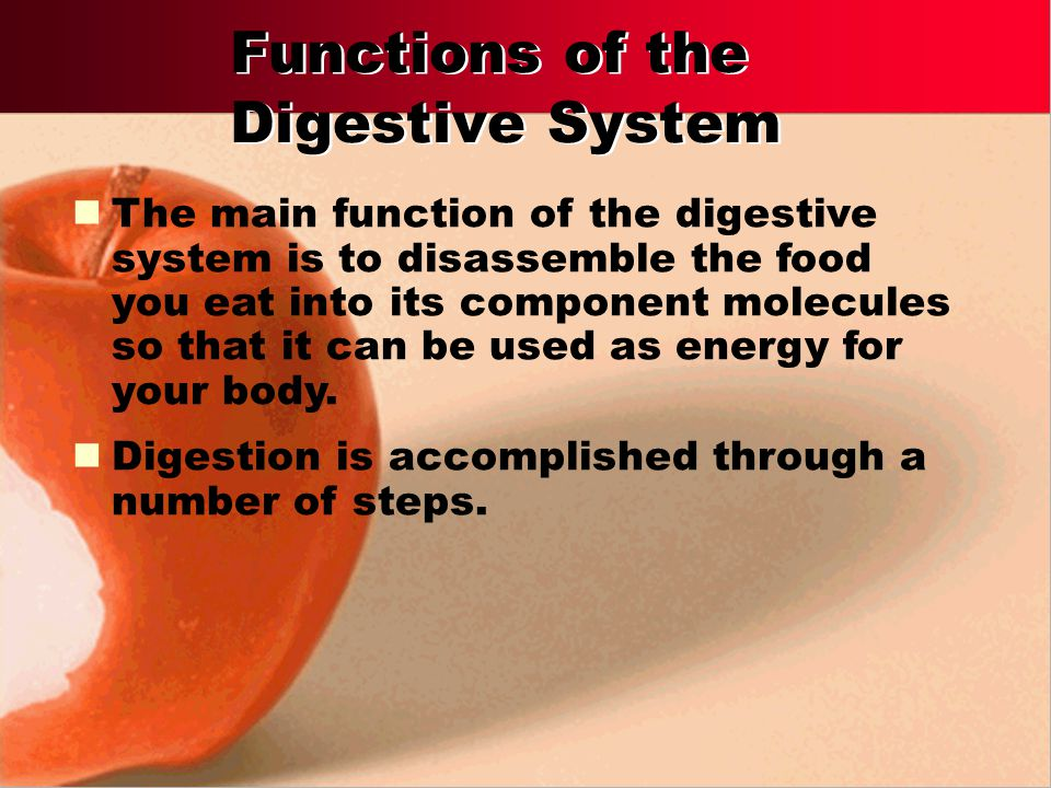 Interpret the different functions of the digestive system organs. Outline the pathway food follows through the digestive tract. Identify the role of e