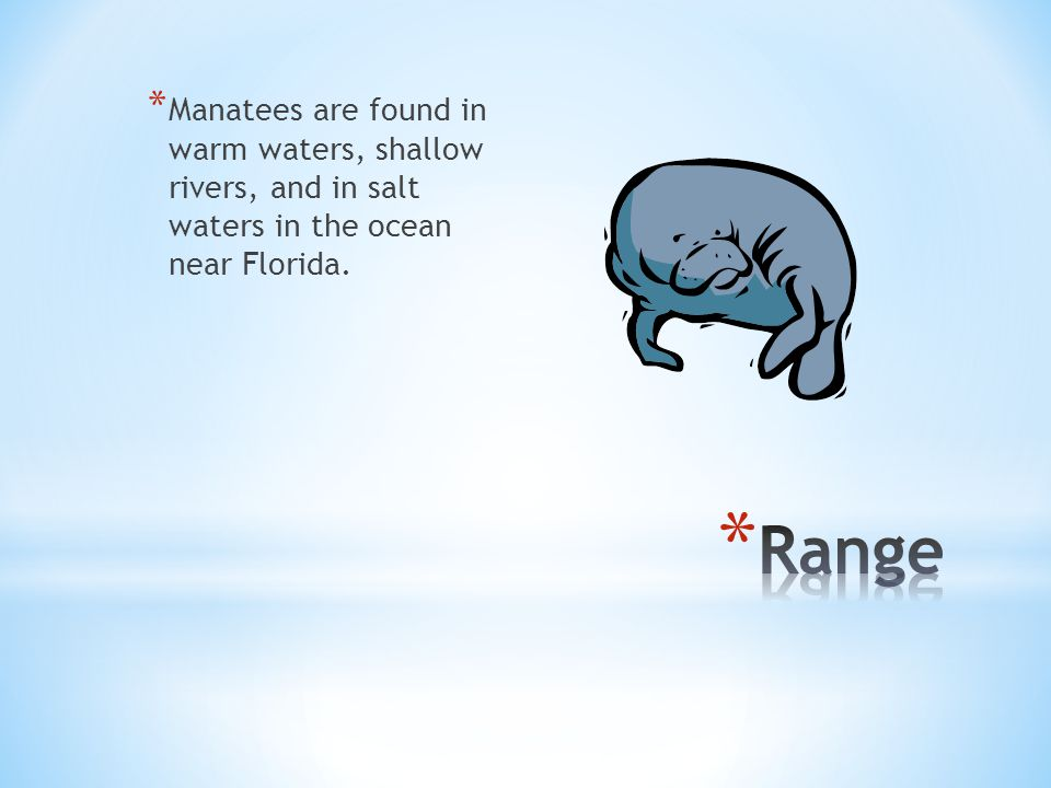 * Manatees are found in warm waters, shallow rivers, and in salt waters in the ocean near Florida.