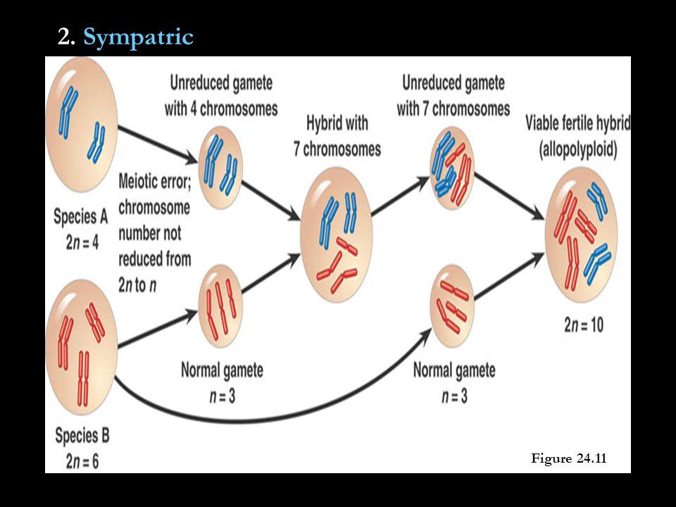 2. Sympatric Figure 24.11