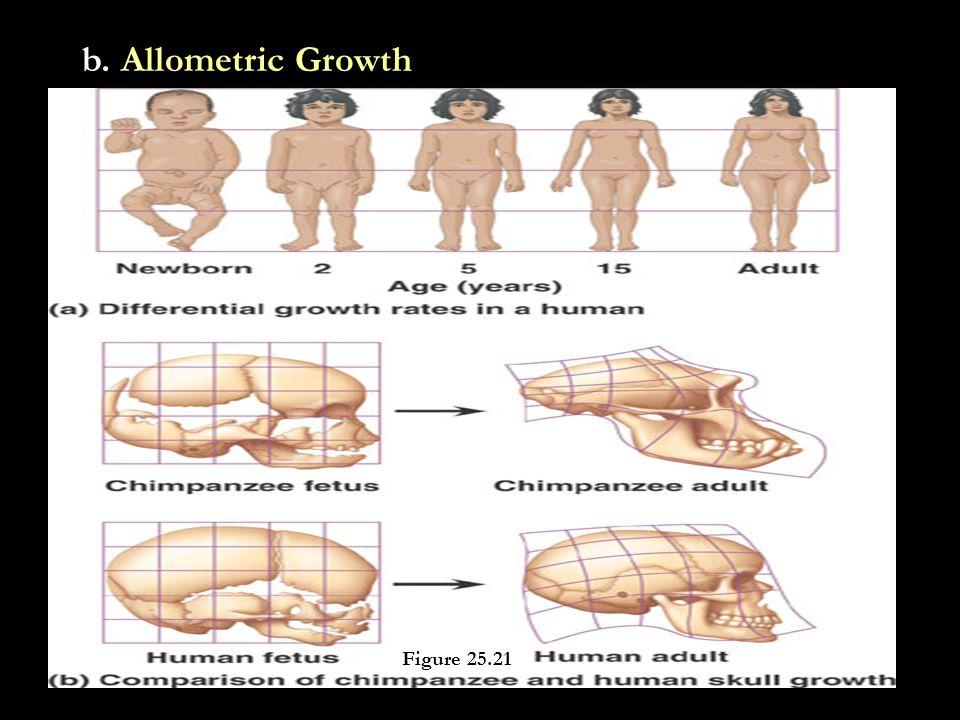 b. Allometric Growth Figure 25.21
