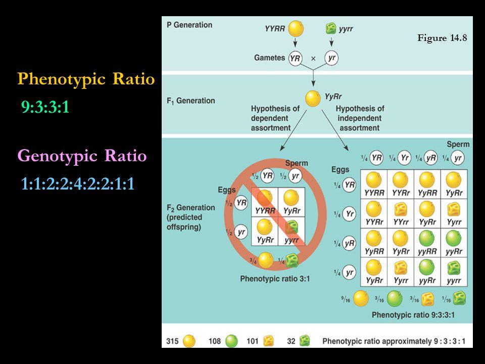 Phenotypic Ratio 9:3:3:1 Genotypic Ratio 1:1:2:2:4:2:2:1:1 Figure 14.8