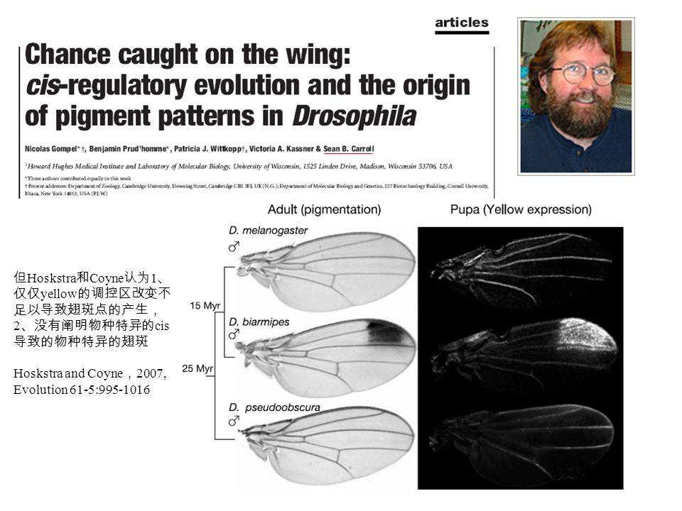 但 Hoskstra 和 Coyne 认为 1 、 仅仅 yellow 的调控区改变不 足以导致翅斑点的产生, 2 、没有阐明物种特异的 cis 导致的物种特异的翅斑 Hoskstra and Coyne , 2007, Evolution 61-5:995-1016
