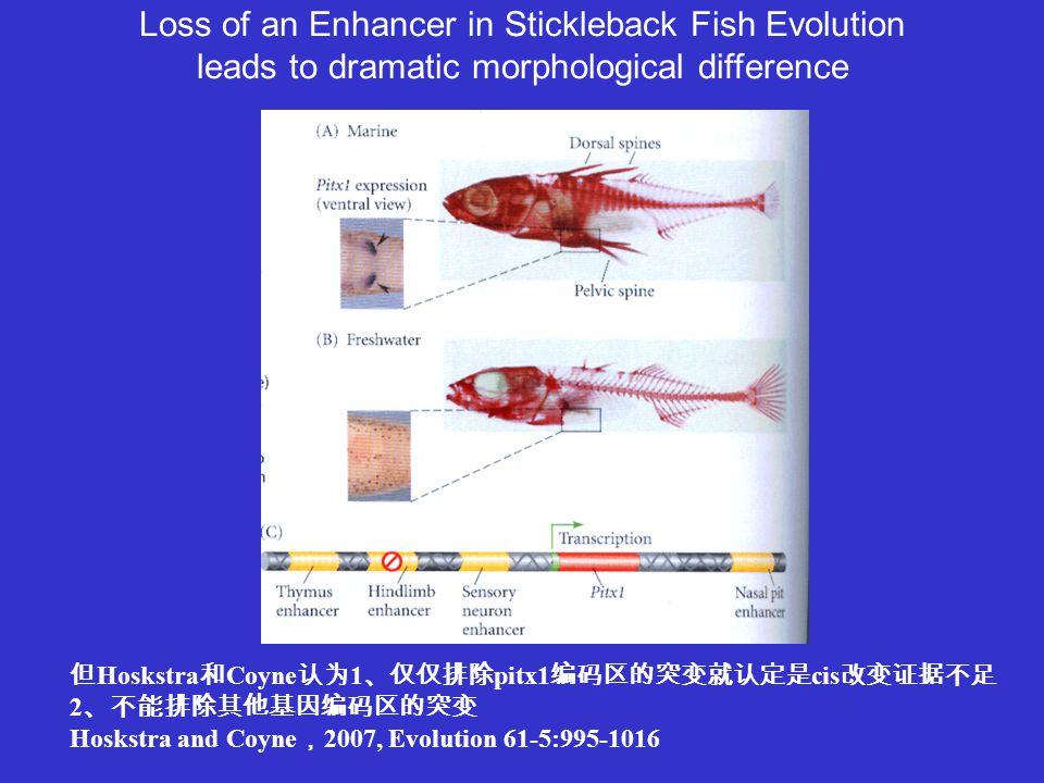 Loss of an Enhancer in Stickleback Fish Evolution leads to dramatic morphological difference 但 Hoskstra 和 Coyne 认为 1 、仅仅排除 pitx1 编码区的突变就认定是 cis 改变证据不足