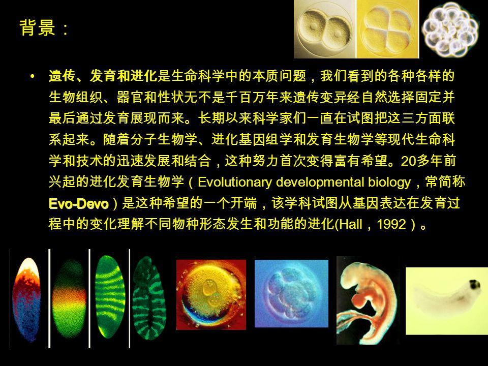 背景: Evo-Devo 遗传、发育和进化是生命科学中的本质问题,我们看到的各种各样的 生物组织、器官和性状无不是千百万年来遗传变异经自然选择固定并 最后通过发育展现而来。长期以来科学家们一直在试图把这三方面联 系起来。随着分子生物学、进化基因组学和发育生物学等现代生命科 学和技术的迅速发展和结合,