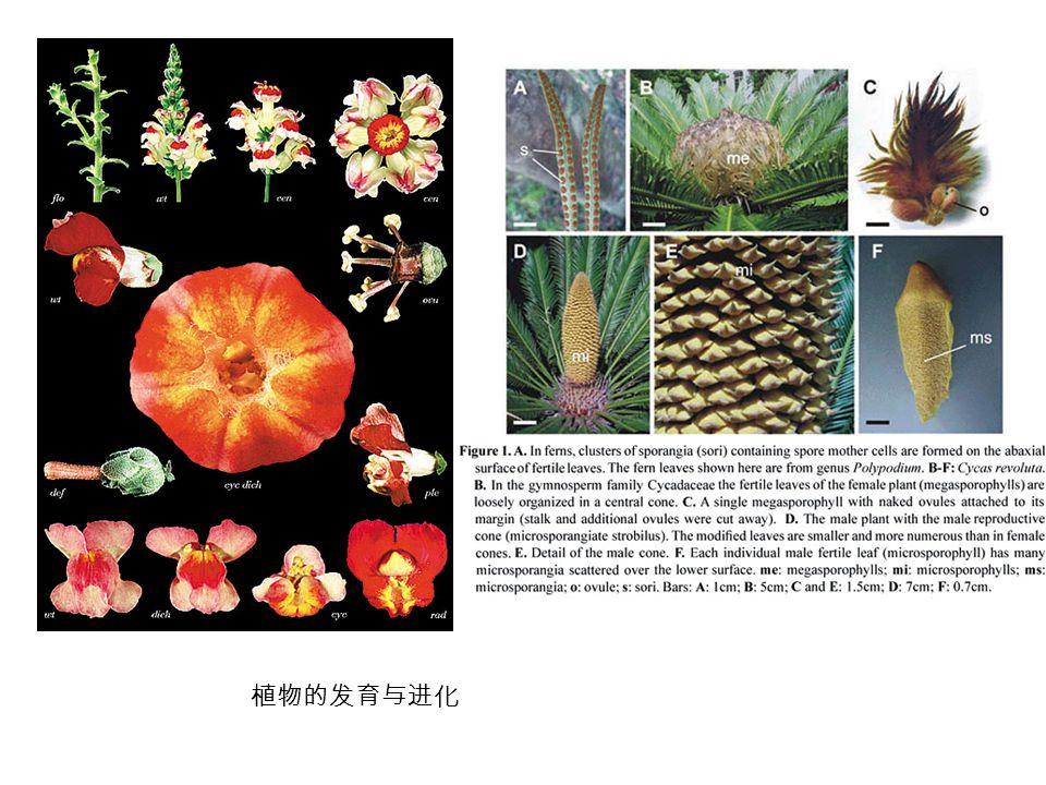 植物的发育与进化