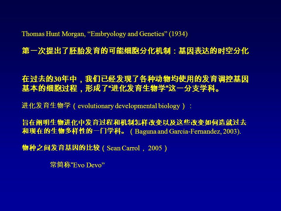 Thomas Hunt Morgan, Embryology and Genetics (1934) 第一次提出了胚胎发育的可能细胞分化机制:基因表达的时空分化 在过去的 30 年中,我们已经发现了各种动物均使用的发育调控基因 基本的细胞过程,形成了 进化发育生物学 这一分支学科。 进化发育生物学( evolutionary developmental biology ): 旨在阐明生物进化中发育过程和机制怎样改变以及这些改变如何造就过去 和现在的生物多样性的一门学科。( Baguna and Garcia-Fernandez, 2003).