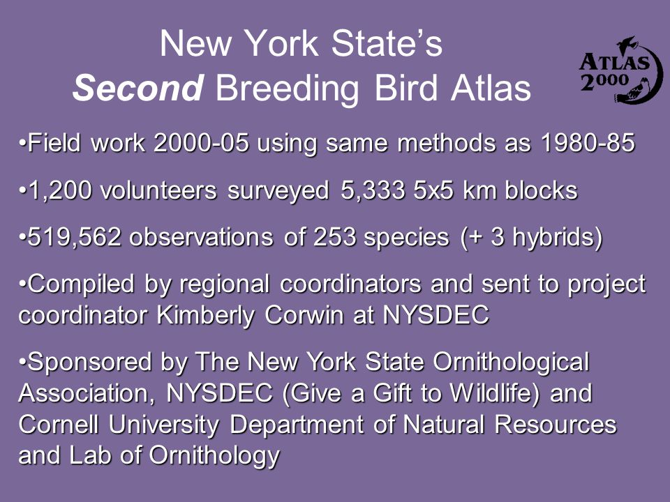 New York State's Second Breeding Bird Atlas Field work 2000-05 using same methods as 1980-85Field work 2000-05 using same methods as 1980-85 1,200 volunteers surveyed 5,333 5x5 km blocks1,200 volunteers surveyed 5,333 5x5 km blocks 519,562 observations of 253 species (+ 3 hybrids)519,562 observations of 253 species (+ 3 hybrids) Compiled by regional coordinators and sent to project coordinator Kimberly Corwin at NYSDECCompiled by regional coordinators and sent to project coordinator Kimberly Corwin at NYSDEC Sponsored by The New York State Ornithological Association, NYSDEC (Give a Gift to Wildlife) and Cornell University Department of Natural Resources and Lab of OrnithologySponsored by The New York State Ornithological Association, NYSDEC (Give a Gift to Wildlife) and Cornell University Department of Natural Resources and Lab of Ornithology