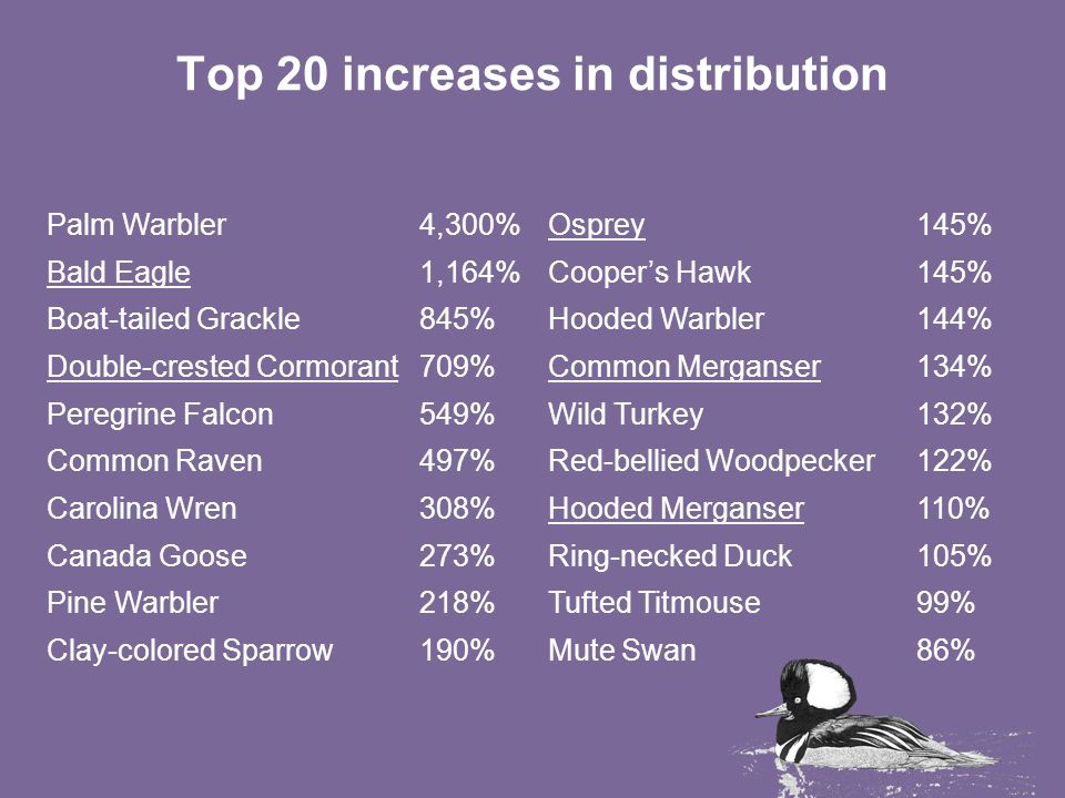 Top 20 increases in distribution Palm Warbler4,300%Osprey145% Bald Eagle1,164%Cooper's Hawk145% Boat-tailed Grackle845%Hooded Warbler144% Double-crested Cormorant709%Common Merganser134% Peregrine Falcon549%Wild Turkey132% Common Raven497%Red-bellied Woodpecker122% Carolina Wren308%Hooded Merganser110% Canada Goose273%Ring-necked Duck105% Pine Warbler218%Tufted Titmouse99% Clay-colored Sparrow190%Mute Swan86%