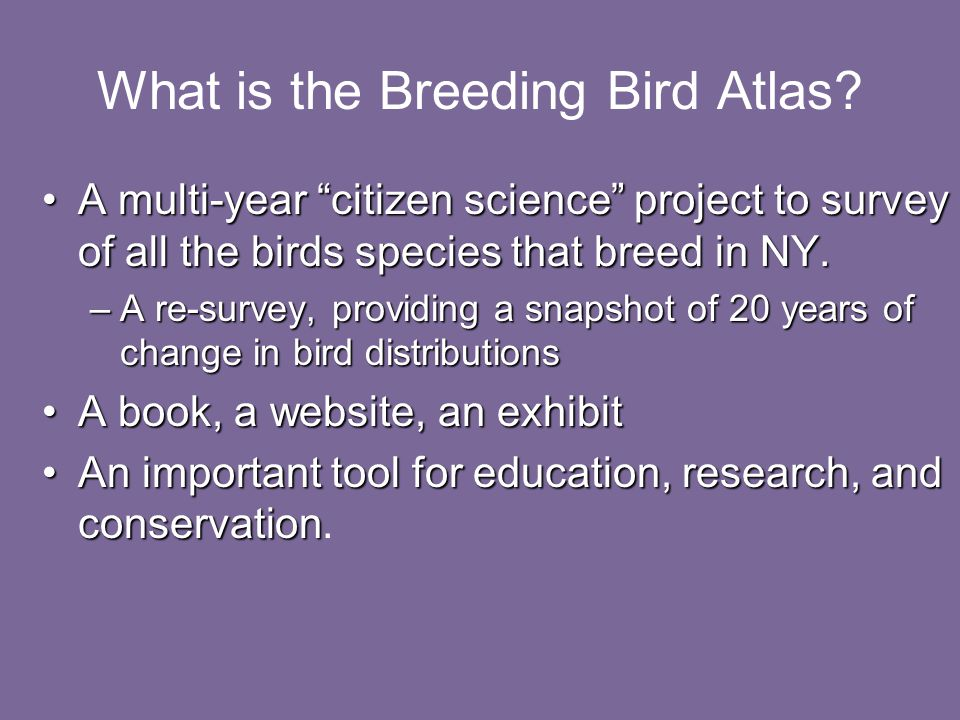 What is the Breeding Bird Atlas.