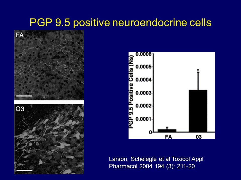 PGP 9.5 positive neuroendocrine cells Larson, Schelegle et al Toxicol Appl Pharmacol 2004 194 (3): 211-20