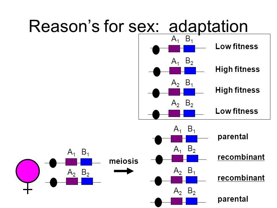Reason's for sex: adaptation A1A1 B1B1 A2A2 B2B2 A1A1 B2B2 A2A2 B1B1 Low fitness High fitness Low fitness A1A1 B1B1 meiosis A2A2 B2B2 A1A1 B1B1 A2A2 B