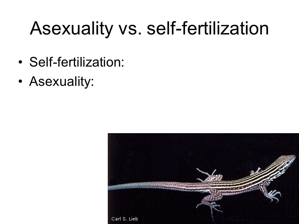 Asexuality vs. self-fertilization Self-fertilization: Asexuality: