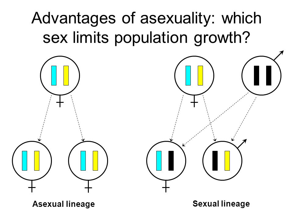 Advantages of asexuality: fitness Frequency of individuals ASEX SEX