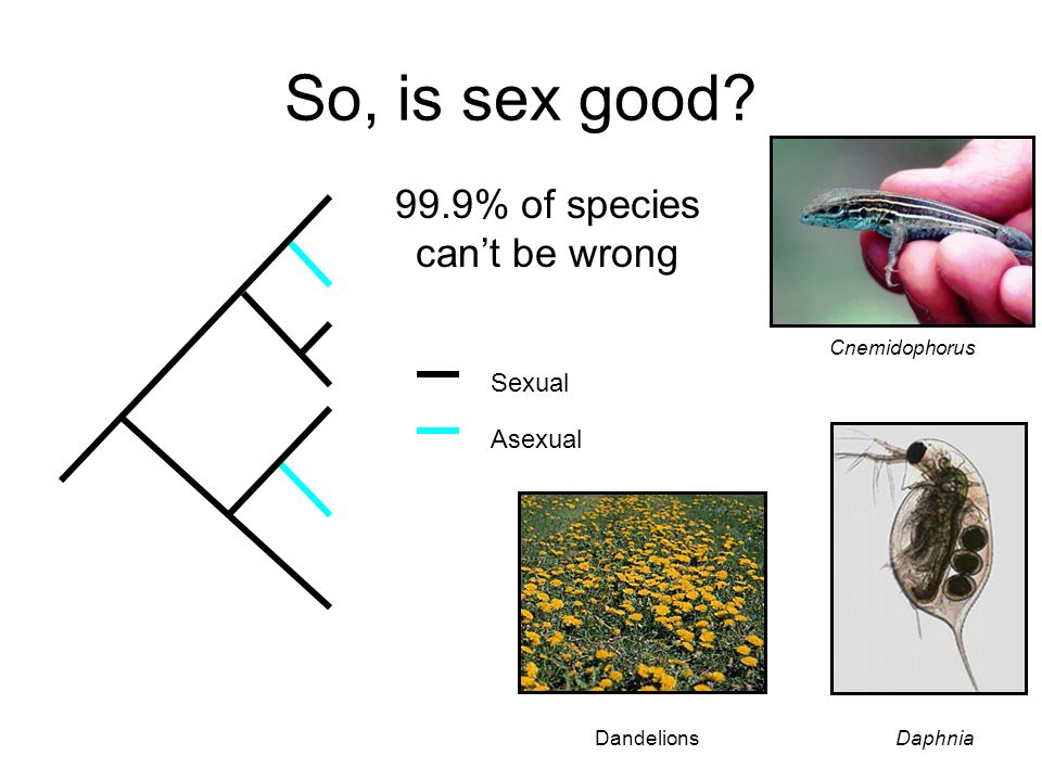 So, is sex good? Sexual Asexual Cnemidophorus DaphniaDandelions 99.9% of species can't be wrong
