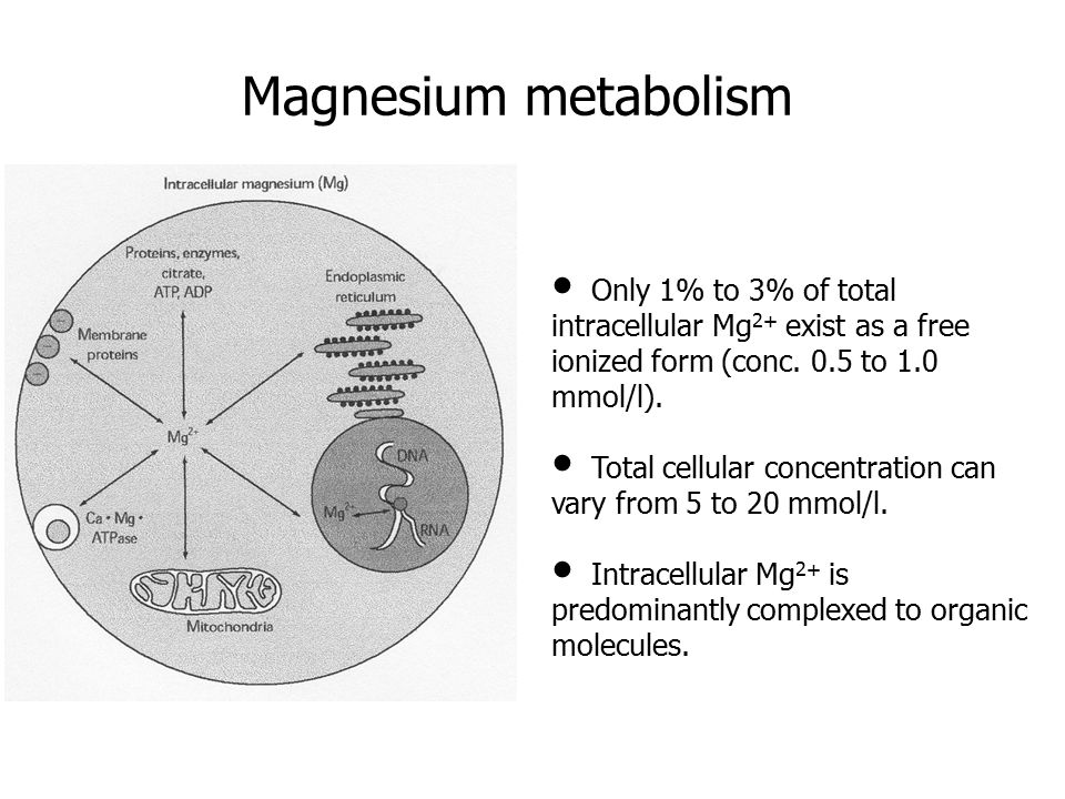 Magnesium metabolism Only 1% to 3% of total intracellular Mg 2+ exist as a free ionized form (conc.