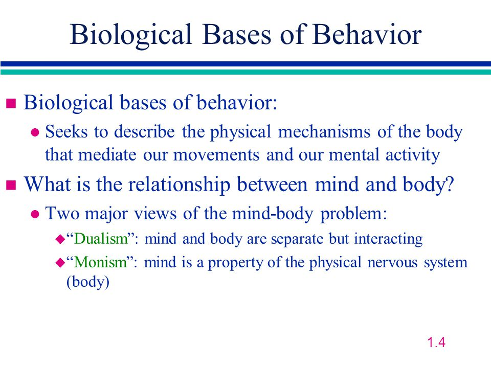 Biological Bases of Behavior n Biological bases of behavior: l Seeks to describe the physical mechanisms of the body that mediate our movements and our mental activity n What is the relationship between mind and body.