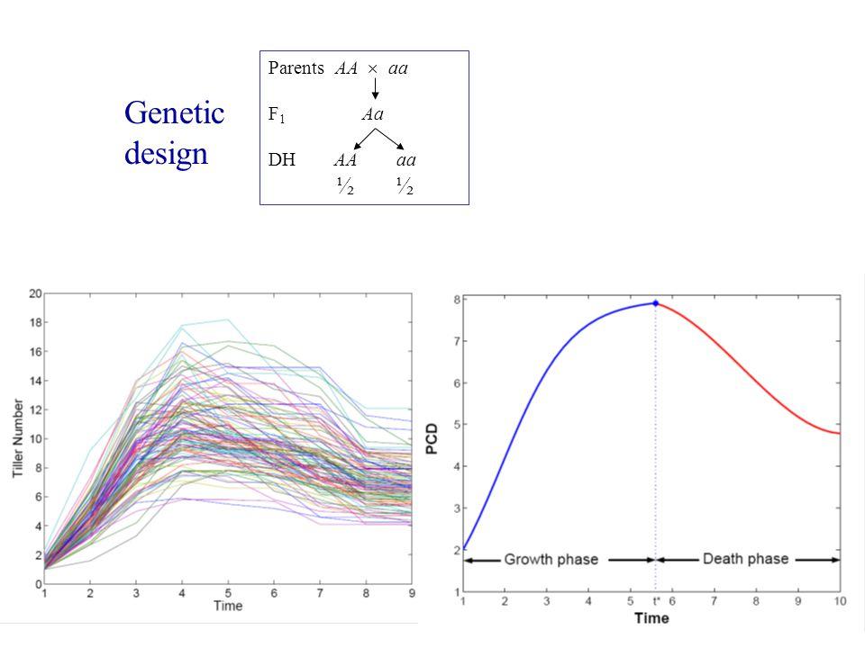Parents AA  aa F 1 Aa DH AA aa ½ Genetic design