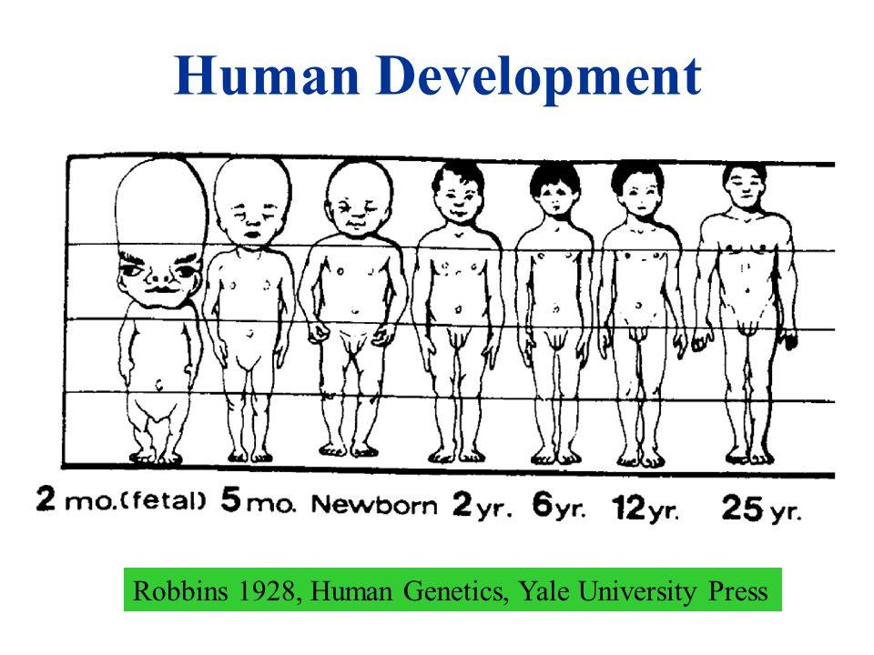 Human Development Robbins 1928, Human Genetics, Yale University Press