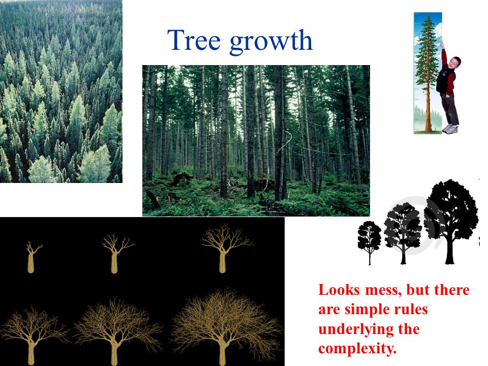 Tree growth Looks mess, but there are simple rules underlying the complexity.