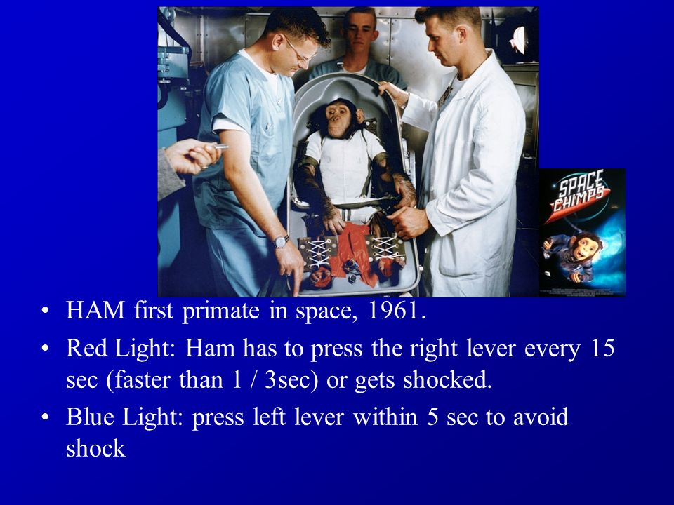 HAM first primate in space, 1961.