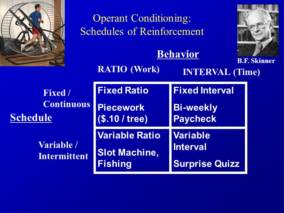 Operant Conditioning: Schedules of Reinforcement B.F.