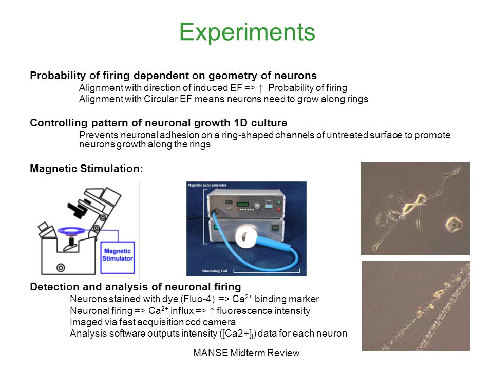 MANSE Midterm Review Experiments Probability of firing dependent on geometry of neurons Alignment with direction of induced EF => ↑ Probability of firing Alignment with Circular EF means neurons need to grow along rings Controlling pattern of neuronal growth 1D culture Prevents neuronal adhesion on a ring-shaped channels of untreated surface to promote neurons growth along the rings Magnetic Stimulation: Detection and analysis of neuronal firing Neurons stained with dye (Fluo-4) => Ca 2+ binding marker Neuronal firing => Ca 2+ influx => ↑ fluorescence intensity Imaged via fast acquisition ccd camera Analysis software outputs intensity ([Ca2+] i ) data for each neuron