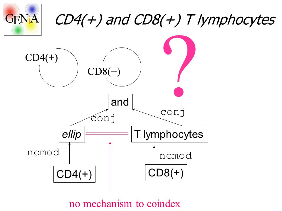 CD4(+) and CD8(+) T lymphocytes CD4(+) CD8(+) ? ellip CD4(+) T lymphocytes CD8(+) and ncmod conj no mechanism to coindex