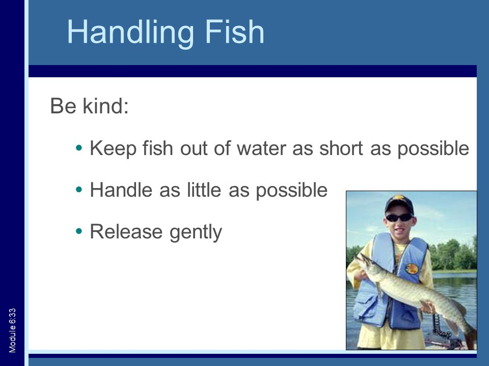 Handling Fish Be kind:  Keep fish out of water as short as possible  Handle as little as possible  Release gently Module 6:33