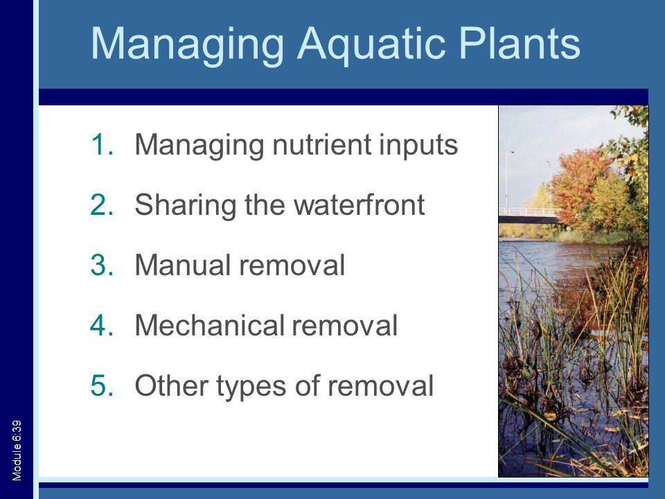Managing Aquatic Plants 1.Managing nutrient inputs 2.Sharing the waterfront 3.Manual removal 4.Mechanical removal 5.Other types of removal Module 6:39