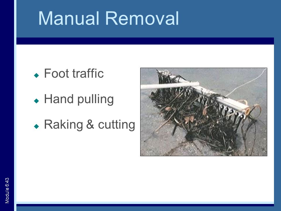 Manual Removal  Foot traffic  Hand pulling  Raking & cutting Module 6:43