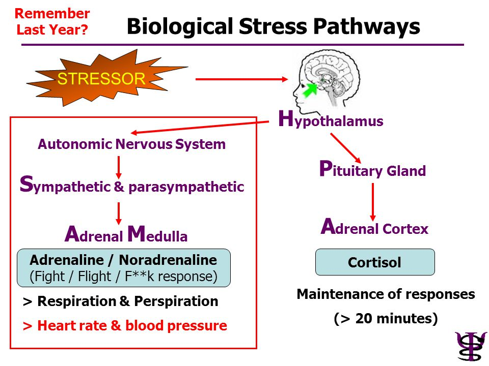 Biological Stress Pathways H ypothalamus STRESSOR Adrenaline / Noradrenaline (Fight / Flight / F**k response) Cortisol Autonomic Nervous System P itui