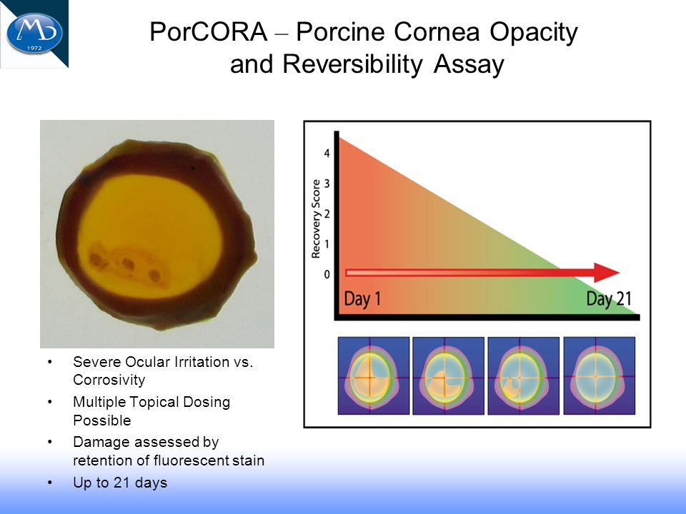 PorCORA – Porcine Cornea Opacity and Reversibility Assay Severe Ocular Irritation vs.