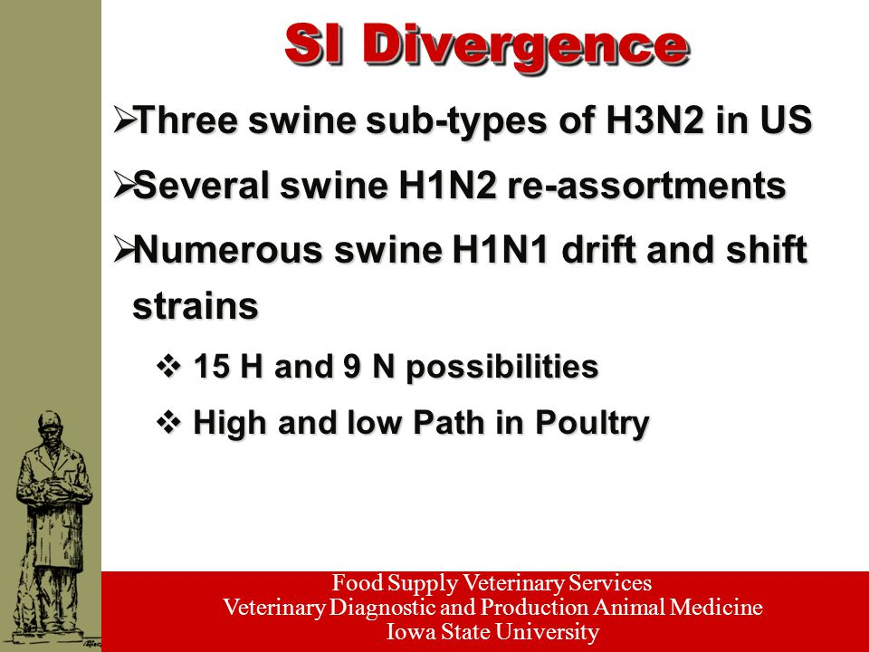 Food Supply Veterinary Services Veterinary Diagnostic and Production Animal Medicine Iowa State University SI Divergence  Three swine sub-types of H3N2 in US  Several swine H1N2 re-assortments  Numerous swine H1N1 drift and shift strains  15 H and 9 N possibilities  High and low Path in Poultry