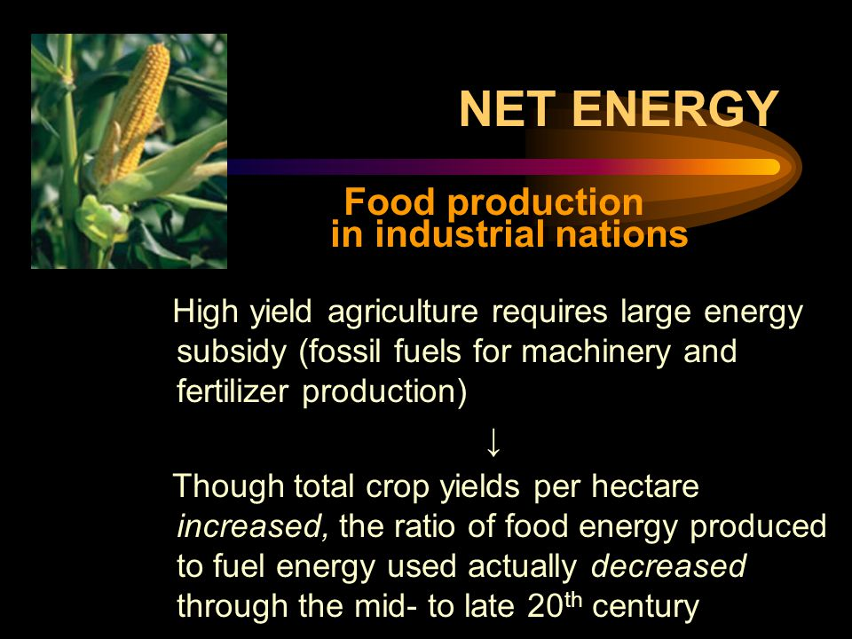 NET ENERGY Food production in industrial nations High yield agriculture requires large energy subsidy (fossil fuels for machinery and fertilizer production) ↓ Though total crop yields per hectare increased, the ratio of food energy produced to fuel energy used actually decreased through the mid- to late 20 th century